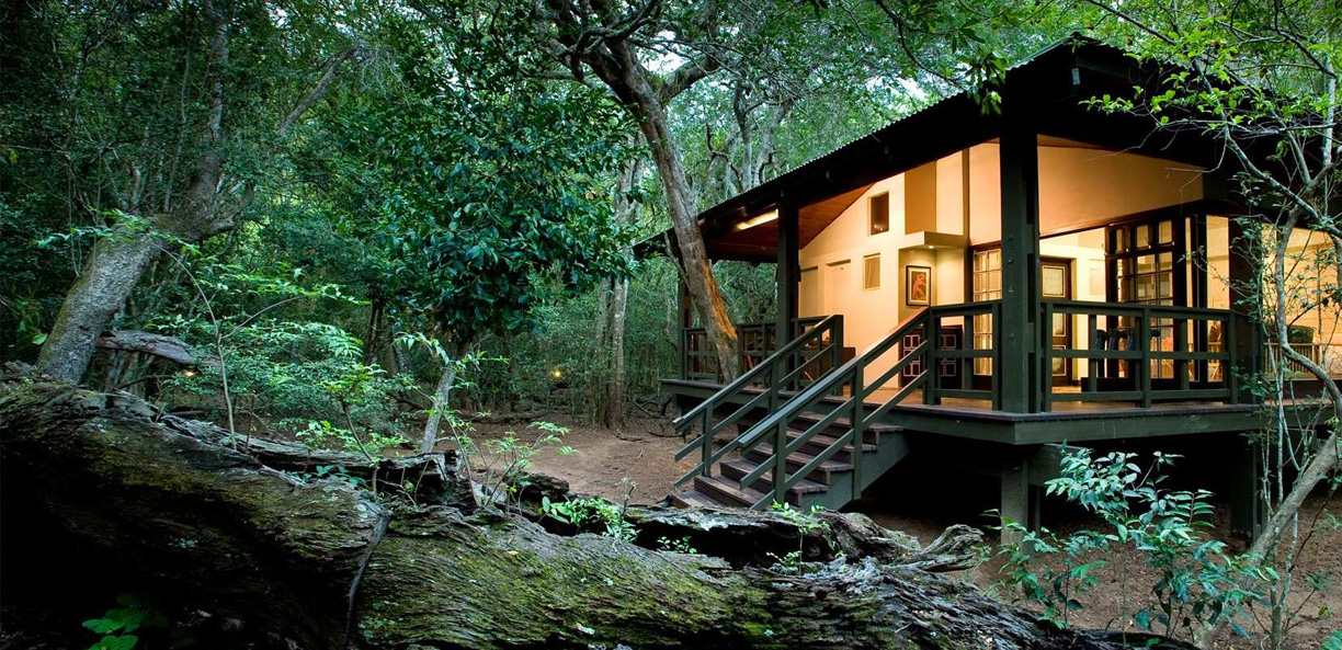 Africa Direct Usa Phinda Forest